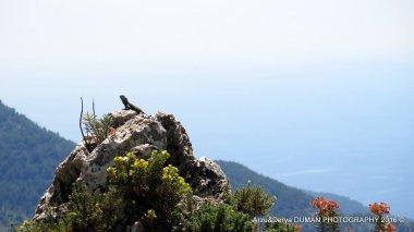 Arzu-Derya PHOTOGRAPHY 2016© (89)