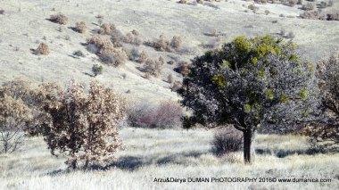 arzu-derya-photgraphy-2016-11